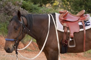 Tommy wearing our new Eqwest half breed saddle