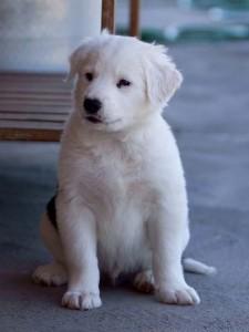 Zeke - polar bear pup?