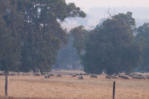 Smoke haze from bushfires down south